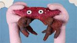 Crabs In Las Vegas
